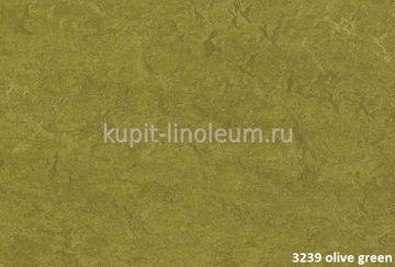 Forbo Marmoleum Real 3239 olive green.